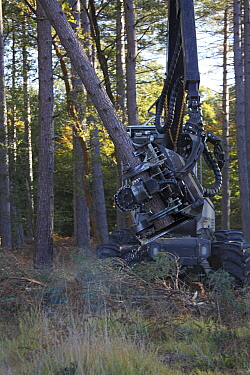Machinery for felling pine trees, Frame Heath Inclosure, New Forest National Park, Hampshire, UK, October 2010  -  Mike Read/ npl