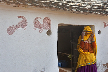 Village life, woman covering her face, in doorway to village home, with peacock art on walls, Sawai Modhopu, Rajasthan, India  -  Bernard Castelein/ npl