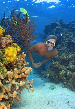 Star coral (Montastraea annularis) black searod (Plexaura homomalla) and finger coral (Porites porites) with a snorkeller exploring a shallow coral reef, East End, Grand Cayman, Cayman Islands, Britis...  -  Alex Mustard/ npl