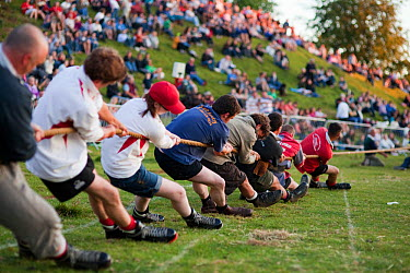 Men pulling on a rope in a tug of war competition, Cotswold Olimpicks, Chipping Campden, Gloucestershire, June 2011  -  Nick Turner/ npl