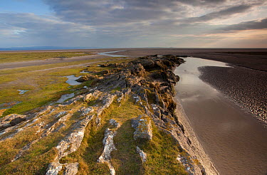 Limestone outcrop on edge of mudflats, Humphrey Head, Morecambe Bay, Cumbria, England, UK, February  -  Peter Cairns/ 2020V/ npl