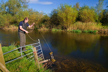 2020VISION Young Champion Shaun Robertson hauling in humane traps used to catch Signal Crayfish (Pacifastacus leniusculus) for The Tweed Foundation to monitor the species population and spread, River...  -  Rob Jordan/ 2020V/ npl