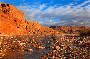 Tamdaght Oasis along the Dades Valley, Morocco 2011  -  Ernie Janes/ npl