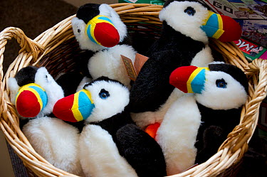 Puffin souvenirs in National Trust shop in Seahouses, Northumberland  -  Uncatalogued/ npl