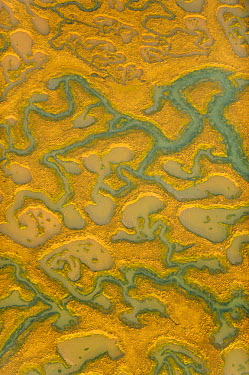 Water channels making patterns in saltmarsh, seen from the air Abbotts Hall Farm, Essex, UK, April 2012  -  Terry Whittaker/ 2020V/ npl