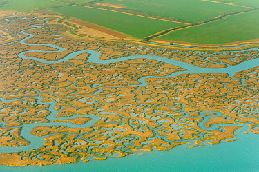 Saltmarsh and reclaimed agricultural land from the air Abbotts Hall Farm, Essex, UK, March 2012  -  Terry Whittaker/ 2020V/ npl