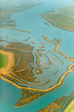 Remnant saltmarsh and coastal realignment at Abbotts Hall Farm, Essex  -  Terry Whittaker/ 2020V/ npl