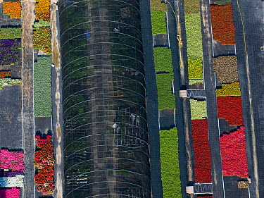Aerial view of intensive flower production, Arles, Camargue, southern France, May 2009  -  Jean E. Roche/ npl