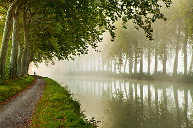 A jogger on the towpath of the Canal du Midi near Castelnaudary, Languedoc-Rousillon, France Septeber 2011  -  David Noton/ npl