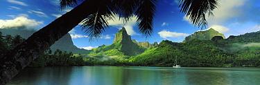 Oponohu Bay, Moorea, Tahititi, French Polynesia  -  David Noton/ npl