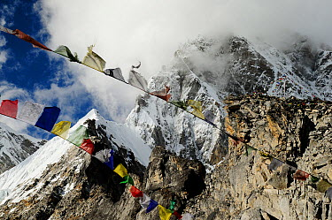 Prayer flags at Pumori Peak (7145 m) seen from Kala Pattar (5545 m), Sagarmatha National Park (World Heritage UNESCO) Khumbu, Everest Region, Nepal, Himalaya, October 2011  -  Enrique Lopez Tapia/ npl