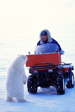 Polar bear (Ursus maritimus) curious spring cub checks out a local elder in snow vehicle outside the arctic village of Kaktovik, Barter Island, 1002 area of the Arctic National Wildlife Refuge, North...  -  Steven Kazlowski/ npl