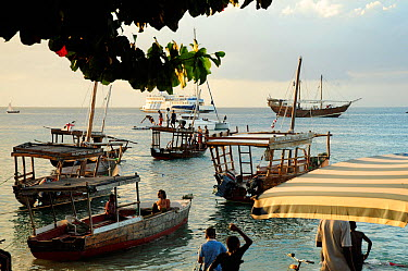 Traditional boats in coastal waters off Zanzibar Town, Stone Town, Zanzibar, Tanzania, October 2008  -  Enrique Lopez Tapia/ npl