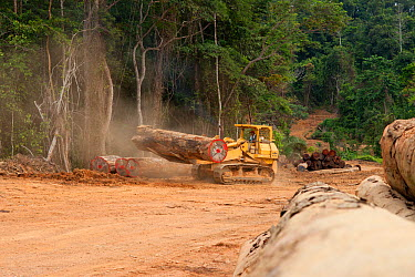 Bulldozer used for large-scale hardwood timber extraction with hardwood logs being readied for loading onto railway trucks that will collect timber from lumber yard located inside the Lope National Pa...  -  Jabruson/ npl