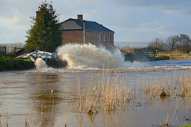 Floodwater being pumped from Lower Salt Moor into the River Parrett near Burrowbridge after weeks of heavy rain, Somerset Levels, UK, January 2013  -  Nick Upton/ npl