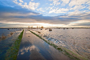 Flooded pasture, ditches and road after heavy rains, on Tadham Moor, Somerset Levels, England, December 2012  -  John Waters/ npl