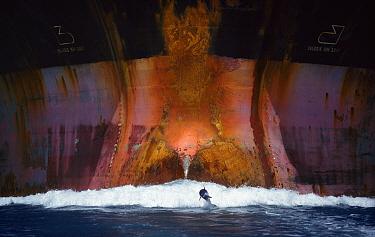 Bottlenose dolphin (Tursiops truncatus) playing in the waves of an oil tanker, Port Aransas, Texas, USA  -  Denis Huot/ npl