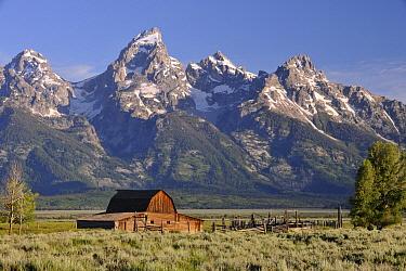 Moulton Barn, Antelope Flats, near Jackson, Wyoming, USA, July 2009  -  David Pike/ npl
