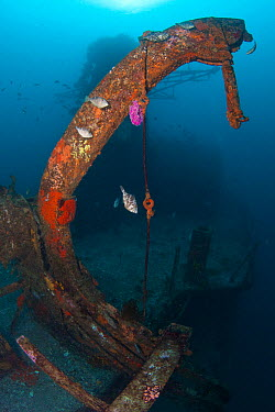 Lifeboat davits on the wreck of HMNZS Canterbury, Bay of Islands, New Zealand, February 2013  -  Sue Daly/ npl