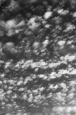 Alto cumulus clouds in black and white Angus, Scotland, August 2012  -  Niall Benvie/ npl