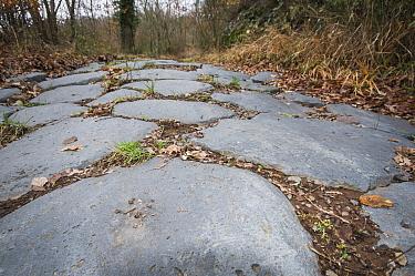 Ancient Roman road made in Basalt near Bolsena, Lazio Italy, September  -  Paul Harcourt Davies/ npl
