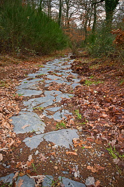 Ancient Roman road made in Basalt near Bolsena, Lazio Italy, January  -  Paul Harcourt Davies/ npl