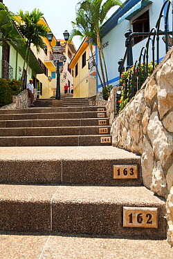Numbered steps in Las Penas galleries, with cafes and shops Guayaquil, Ecuador  -  Michele Westmorland/ npl