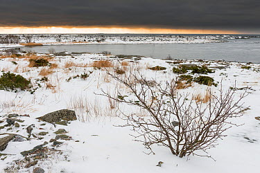Uto, farthest island of Baltic Sea archipelago in the Aland Islands, southwest Finland, February  -  Unknown photographer