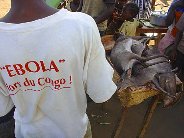 Blue Duiker (Cephalophus monticola) meat for sale at market Mbomo, Odzala-Kokoua National Park, Republic of Congo, May 2005, with Man wearing 'Ebola hors du Congo' t-shirt during Ebolavirus outbreak  -  Jabruson/ npl