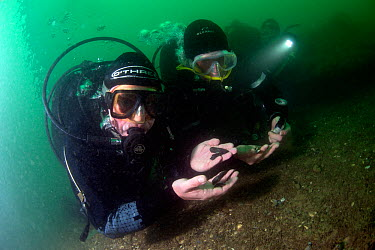 Presenter Mary-Anne Ochota, examining copper keel pins on the wreck of HMS Colossus, Scilly Isles, UK On location for tv programme Britain's Secret Treasures July 2013  -  Michael Pitts/ npl