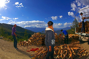 Fish eye view of people collecting firewood, Daocheng City, Sichuan Province, China, July 2010  -  Dong Lei/ npl