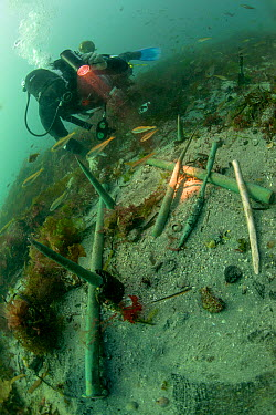 Copper keel pins from the wreck of a British First rate warship HMS Colossus wrecked in 1758 St Mary's Roads, Isles of Scilly, England, UK, August  -  Michael Pitts/ npl