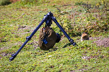 Remote camera set up for photographing a Big-headed mole rat (Tachyoryctes macrocephalus) appearing from its hole, Bale Mountains National Park, Ethiopia  -  Will Burrard-Lucas/ npl