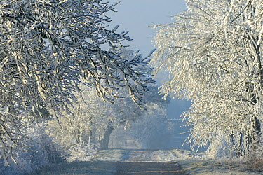 Small path in frosty landscape, Vosges, France, November 2013  -  Fabrice Cahez/ npl