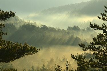 Landscape with light rays over forest, Lozere, Causse Mejean, Gorges de la Jonte, France, December 2013  -  Fabrice Cahez/ npl