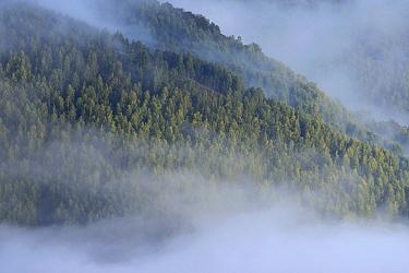 Early autumn fog above the forests of the Retezat National Park Transylvania, Romania September  -  Zoltan Nagy/ npl