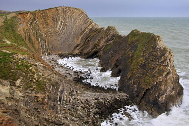 Stair Hole showing example of folded strata known as Lulworth Crumple, Lulworth, Jurassic Coast, Dorset, UK March 2013  -  Colin Varndell/ npl