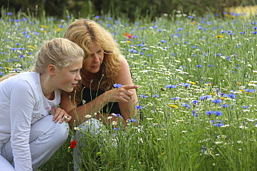 Mother and daughter observing Honey bee (Apis mellifera) in flight, in wild flowers at Bee World, Bishops Meadow, Farnham Surrey, England, UK, July 2014 Model released Bee Worlds is an initiative of F...  -  Mark Taylor/ npl