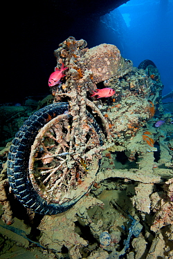 A British World War II BSA M20 motorbike inside Hold 2 of the wreck of HMS Thistlegorm, home tp a pair of Red Sea soldierfish (Myripristis murdjan) and a nudibranch (Nembrotha megalocera) in the centr...  -  Alex Mustard/ npl