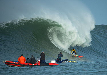 Surfer competing in the Mavericks 2014 surfing competition, watched by people on RIB, Half Moon Bay, California, USA, January 2014  -  Michael D. Kern/ npl
