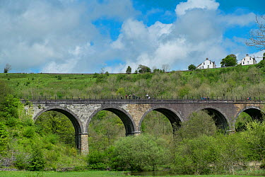 Walkers and cyclists on the Monsal Viaduct, known as the Monsal Trail, Peak District National Park, Derbyshire, England  -  Gary K. Smith/ npl