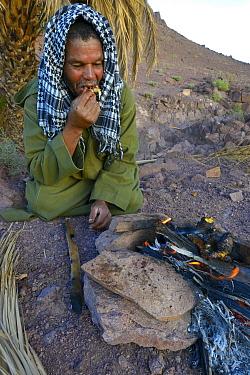 Local Berber man eating Spiny-tailed lizard (Uromastyx nigriventris) cooked on fire, near Ouarzazate, Morocco, October 2013  -  Daniel Heuclin/ npl