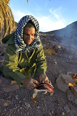 Local Berber man preparing Spiny-tailed lizard (Uromastyx nigriventris) to cook on fire, near Ouarzazate, Morocco, October 2013  -  Daniel Heuclin/ npl