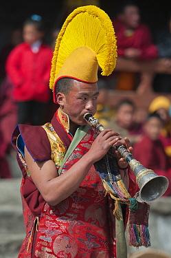 Buddhist monk playing trumpet during Torgya festival Galdan Namge Lhatse Monastery, Tawang, Arunachal Pradesh, India January 2014  -  Bernard Castelein/ npl