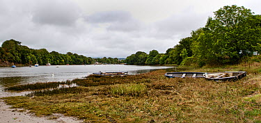 River Teifi at StDogmaels looking towards Cardigan, Ceredigion, Wales, United Kingdom, September 2013  -  Graham Brazendale/ npl