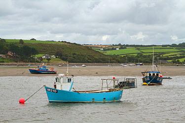 Moored fishing boat on the River Teifi, St Dogmaels, Pembrokeshire, Wales, United Kingdom, September 2013  -  Graham Brazendale/ npl