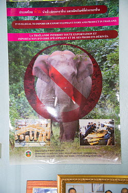 Anti-pouching poster stating that it is illegal to import or export elephant ivory into Thailand, Nakhon Sawan, Thailand, 2013  -  Steve O. Taylor/ npl