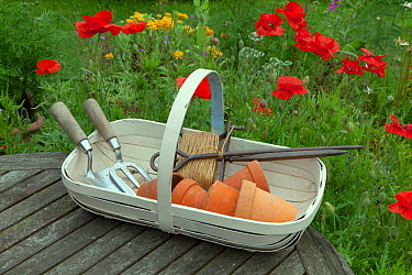Trug containing flower pots and gardening tools, UK, June  -  Ernie Janes/ npl