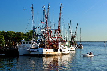 Shrimp boats docked on Shem Creek in the town of Mount Pleasant, South Carolina, USA  -  Kirkendall-spring/ npl