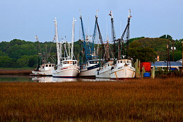 Fishing boats of the Gay Fish Company docked along Ward Creek, Frogmore, South Carolina, USA  -  Kirkendall-spring/ npl